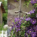 Flowers On The Garden Wall by Elizabeth MacKinney