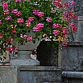 Flowers On The Steps by Mary Machare