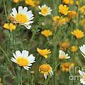 Flowers by Sindhu