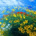Flowery Sky by David Smith