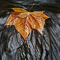 Flowing Leaf by David Campbell