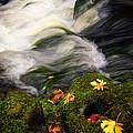 Flowing Stream  by Steve McKinzie