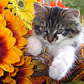 Fluffy Kitten Staring At A Mouse - Cute Kitty Cat In Fall Autumn Colours With Gerbera Flowers by Chantal PhotoPix