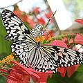 Flutter by Jan Canavan