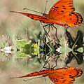 Fluttering Reflections - Butterfly by Travis Truelove
