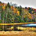 Fly Pond On Rondaxe Road II by David Patterson