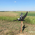 Flying Baby Pandas. North Dakota. by Ausra Huntington nee Paulauskaite
