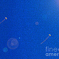 Flying Kites  by First Star Art