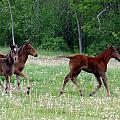 Foals In Dandelions by Bruce Ritchie