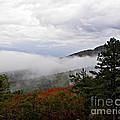 Fog And Foliage by Tisha Clinkenbeard