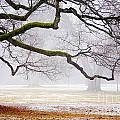 Fog In The Park by Kati Finell
