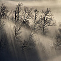 Fog by Michele Pietrangelo