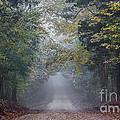 Fog Road by Joey Wilder
