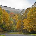 Foggy Autumn Day by Susan Leggett