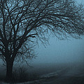 Foggy Country Road by Paul Roach
