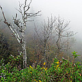 Foggy Day On The Blueridge by Duane McCullough