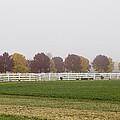 Foggy Fall by Joel Witmeyer