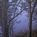 Foggy Fall Morning by Pamela Baker