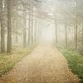 Foggy Forest by Sonya Kanelstrand