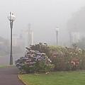 Foggy Morn by Rebecca Samler