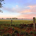 Foggy Morning Field by Sue Duda