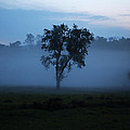 Foggy Morning by Seth Solesbee