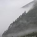 Foggy Mountain by Lloyd Alexander