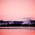 Foggy Pink Morning by Trish Tritz