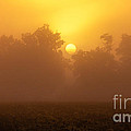 Foggy Sun by Robert Bales