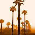 Foggy Sunrise by Jim Painter