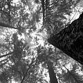 Foggy Treetops by Scott Merriman