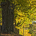 Foliage At The Cemetery by Jonathan Steele