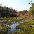 foliage in the swamp lands of CT by Kim Galluzzo Wozniak