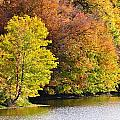 Foliage On The Pond by Kim Hymes