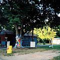 Folk Art Yard And Tree by Doug Duffey