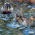 Follow The Leader by Donna Proctor