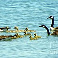 Follow The Leader by Karen Wiles