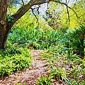 Follow The Path  by Betsy Knapp