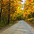 Follow The Yellow Leafed Road Painted by Steve Harrington