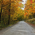 Follow The Yellow Leafed Road by Steve Harrington
