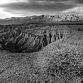Font's Point Bush   Black And White by Peter Tellone