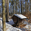 Food Point For Animals In Winterly Forest by Matthias Hauser
