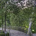 Foot Bridge Approach by David Waldrop