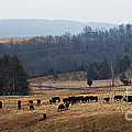 Foothills Of West Virginia by Barbara McMahon