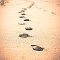 Footprints In Sand by Paul Velgos