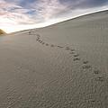 Footprints In Sand  by U Schade