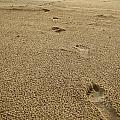 Footprints In The Sand by Jeremy Clark