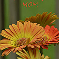 For The One And Only Mom by Donna Brown