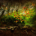 Forbidden Woods by Svetlana Sewell