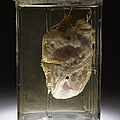 Forensic Evidence, Heart Perforated by Science Source